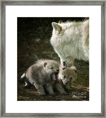 Arctic Wolf Pups Framed Print