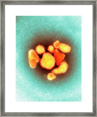 Arenavirus Virus Particles Framed Print by Centre For Infections/public Health England