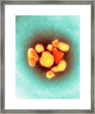 Arenavirus Virus Particles Framed Print