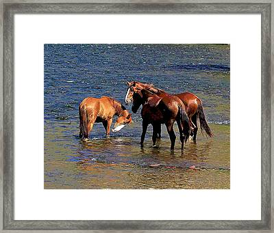 Arizona Wild Horses On The Salt River Framed Print