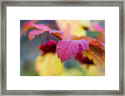 Arrowwood Leaf - Featured 3 Framed Print