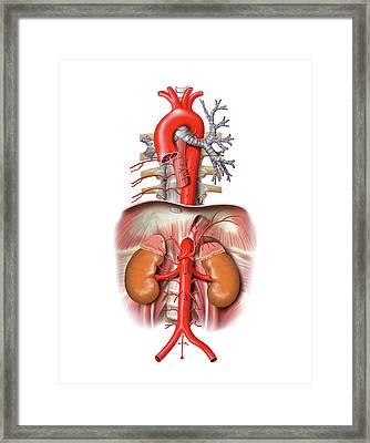 Arterial System Framed Print by Asklepios Medical Atlas