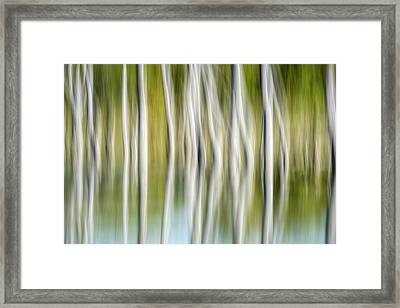 Artistic Abstract Of Trees Framed Print by Rona Schwarz