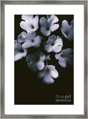 Artistic Dark Blue Flowers In Night Winter Garden Framed Print by Jorgo Photography - Wall Art Gallery