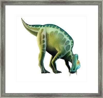 Artwork Of A Corythosaurus Dinosaur Framed Print