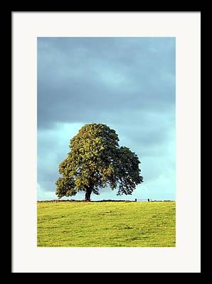 Excelsior Field Framed Prints