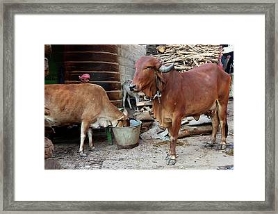 Asia, India, Varanasi Framed Print