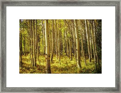 Aspen Glow Framed Print by Randy Wood