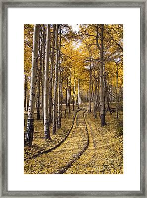 Aspen Road Co Framed Print by Sean Bagshaw