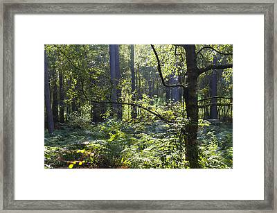 Aspley Woods Framed Print