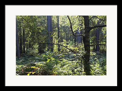 Aspley Framed Prints