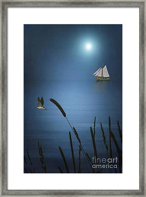 At Sea Framed Print by Tom York Images
