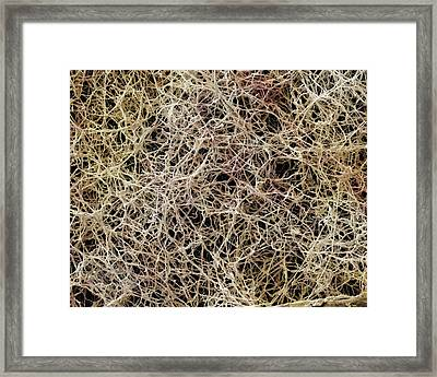 Athlete's Foot Fungus Framed Print