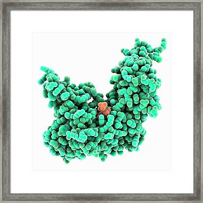 Atp-dependent Dna Ligase Molecule Framed Print by Laguna Design