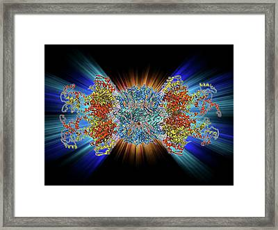 Atp-dependent Protease Molecule Framed Print by Laguna Design