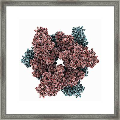 Atp Sulfurylase Molecule Framed Print by Science Photo Library