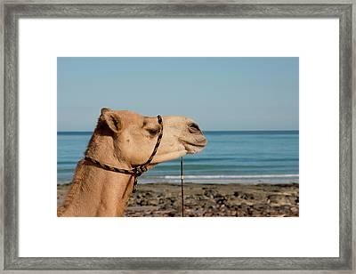 Australia, Cable Beach Framed Print