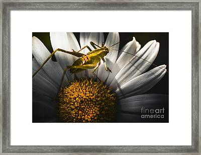 Australian Grasshopper On Flowers. Spring Concept Framed Print by Jorgo Photography - Wall Art Gallery