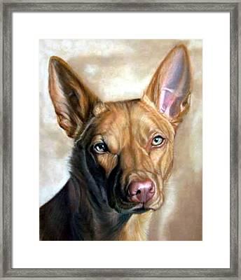 Australian Kelpie Dog Portrait Framed Print by Olde Time  Mercantile