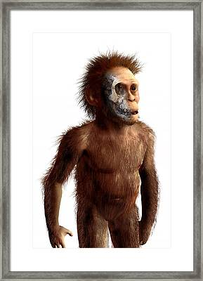 Australopithecus Afarensis, Artwork Framed Print by Science Photo Library