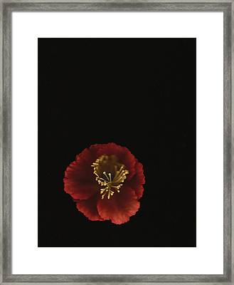 Autographic Poppy - Color Framed Print