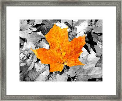 Autumn Abstract Framed Print by Dan Sproul