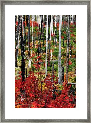 Autumn At The Santiam Pass, Oregon, Usa Framed Print