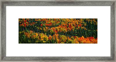 Autumn Color At Porcupine State Park Framed Print by Panoramic Images