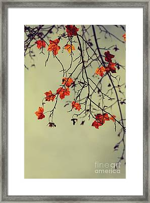 Autumn Framed Print by Diana Kraleva