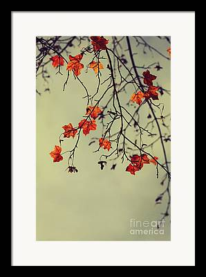 Fall Season Digital Art Framed Prints