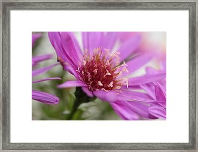 Autumn Flower Framed Print by Heike Hultsch