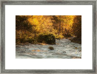 Autumn Forest Framed Print by Iris Greenwell