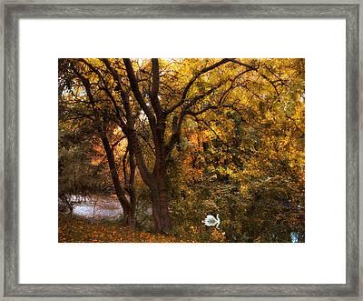 Autumn Glow Framed Print by Jessica Jenney