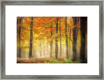 Autumn Gold Framed Print by Ian Hufton