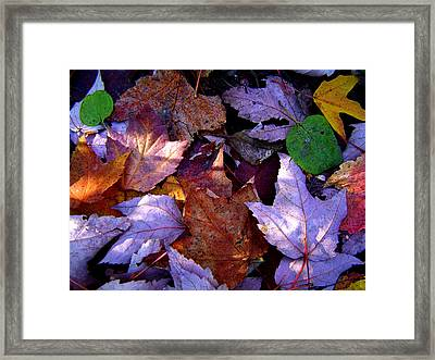 Autumn Groundcover Framed Print