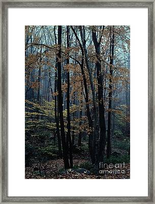 Autumn In The Forest Framed Print by Adeline Byford