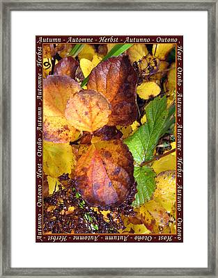 Autumn Leaves 2 Framed Print