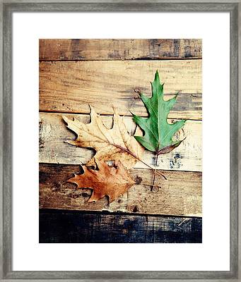 Autumn Leaves Ablaze With Color Framed Print by Kim Fearheiley