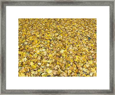 Autumn Leaves Framed Print by Michal Boubin