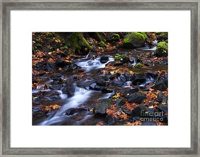 Autumn Meander Framed Print