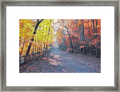 Autumn On Forbidden Drive Framed Print by Bill Cannon
