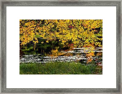 Autumn Pond 2013 Framed Print