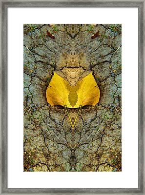 Autumn Reflections Framed Print by Dan Sproul