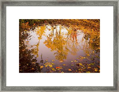 Autumn Reflections Framed Print by Erin Cadigan