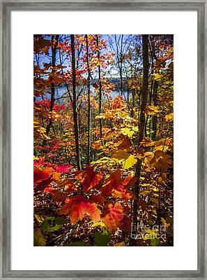 Autumn Splendor Framed Print by Elena Elisseeva
