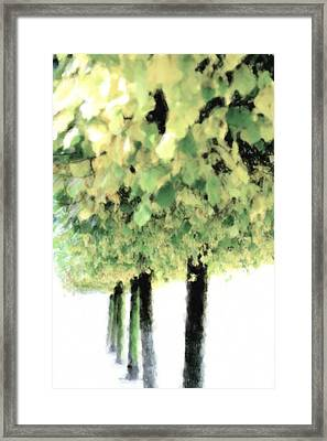Autumn Trees  Framed Print by Tommytechno Sweden