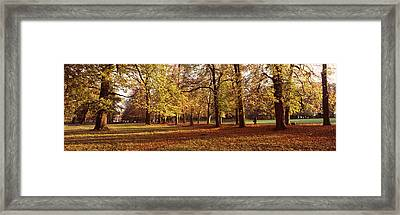 Autumnal Trees In A Park, Ludwigsburg Framed Print