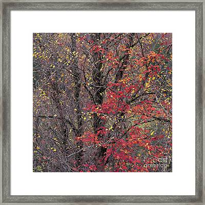 Framed Print featuring the photograph Autumn's Palette by Alan L Graham