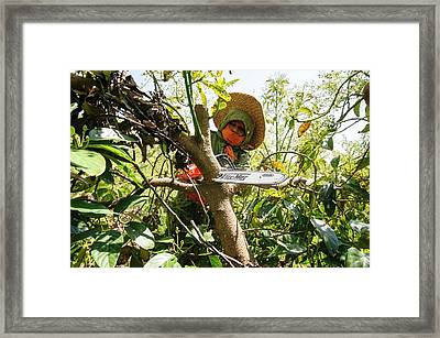 Avocado Plantation. Framed Print