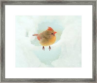 Baby Female Cardinal Framed Print by Janette Boyd